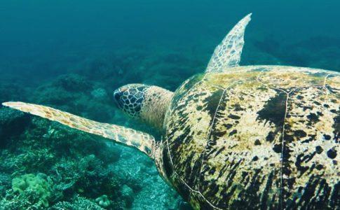 snorkelen schildpadden moalboal